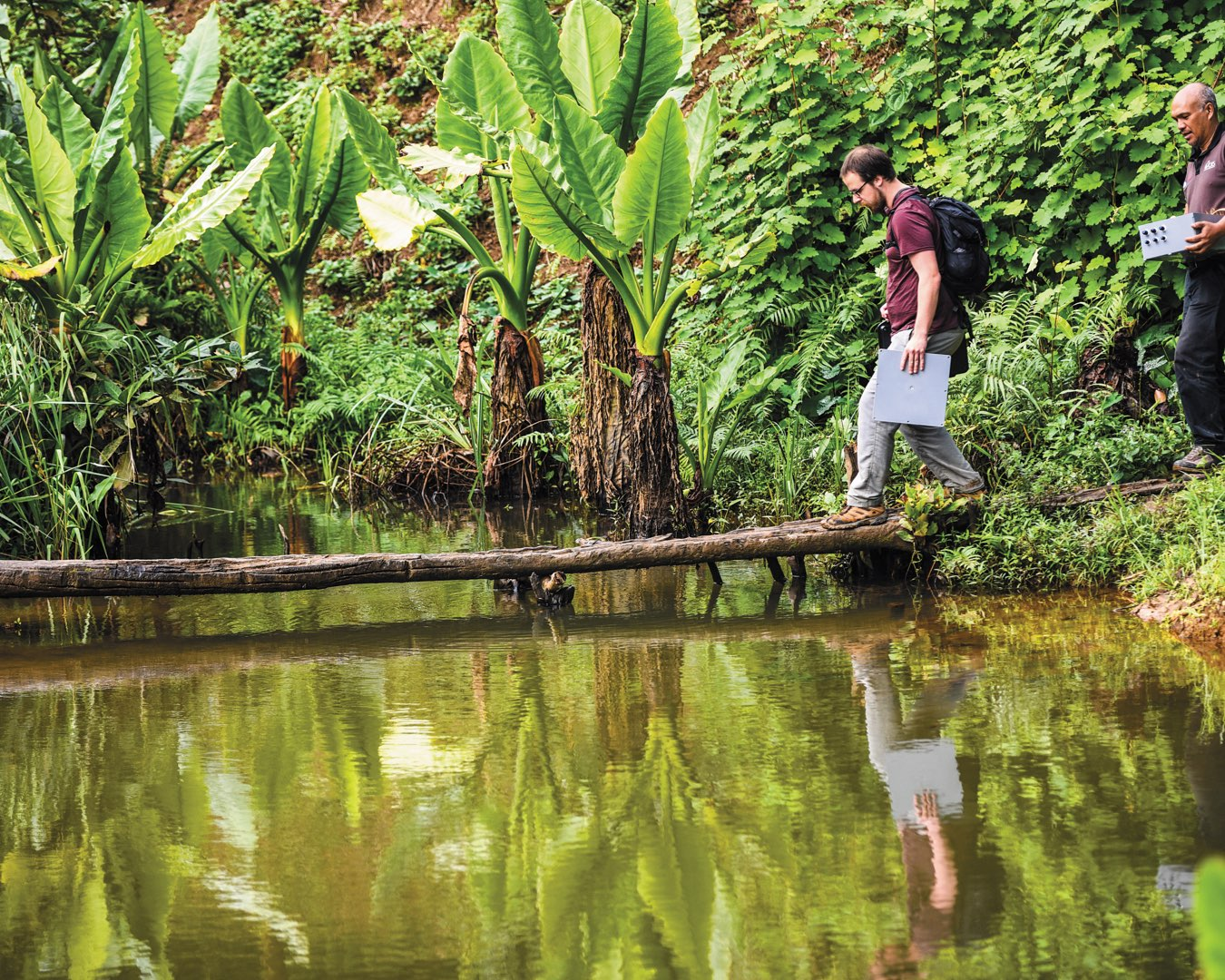 Surrounded by greenery and ferns, a male student and a CRS partner in Madagascar walk across a log over a body of water
