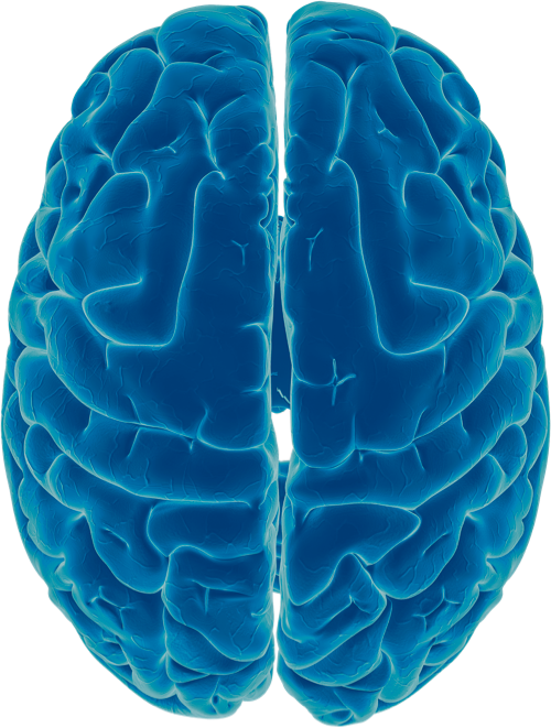 A blue photo-illustration of a brain, highlighting its crevices in light blue