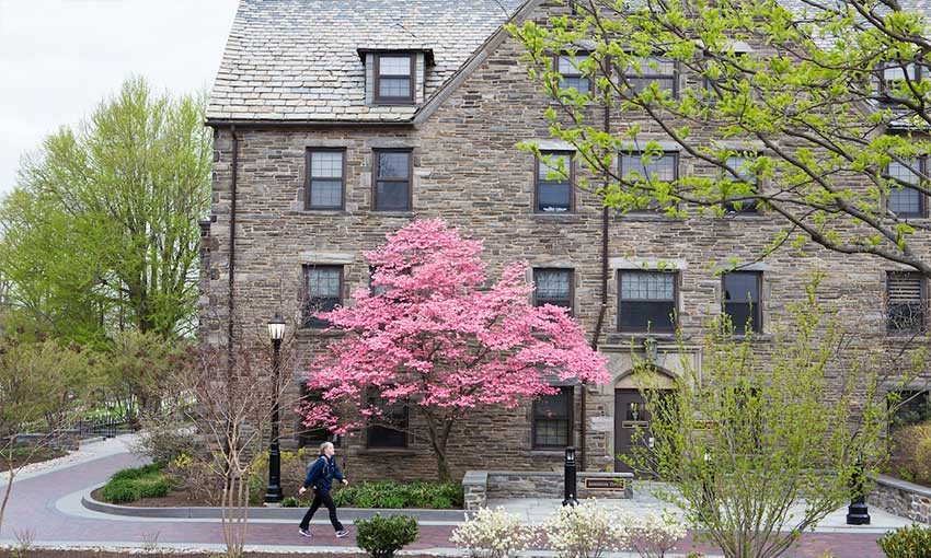 Exterior of side of Austin Hall showing tree with pink flowers