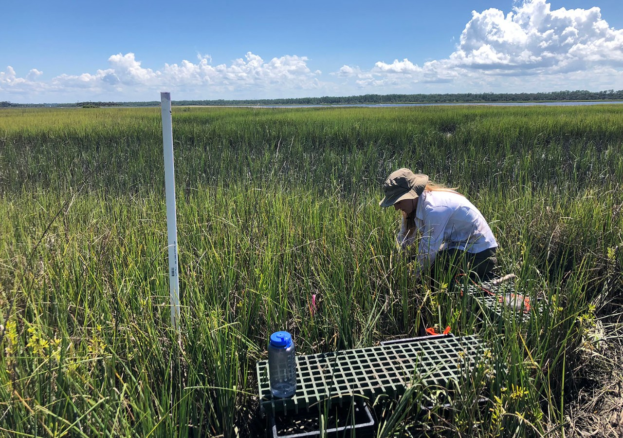 Emily Geoghegan '19 MS works in a control plot collecting data
