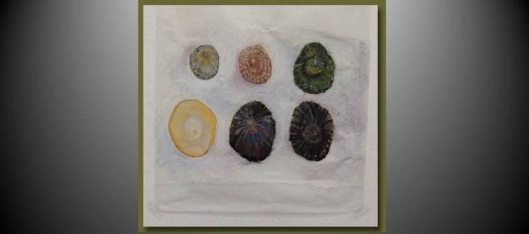 The Colors of Limpets by Susan von Medicus