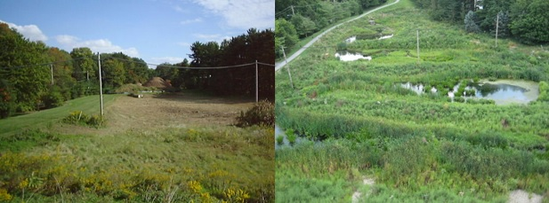 Original detention basin (1999) vs. Constructed Stormwater Wetland (2012)