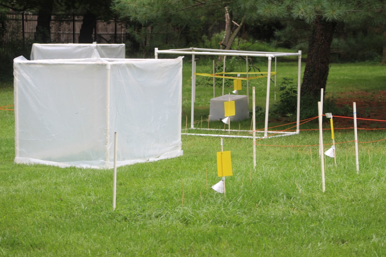 Two cube-like structures made of PVC piping sit on the grass. The structure in the foreground is covered with a plastic tarp. In the background, the uncovered structure is visible, with a few wooden stakes stuck in the ground inside of it. Some stakes are tagged with yellow paper.