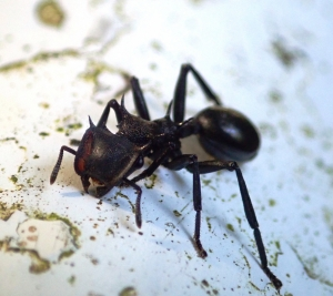Ant crawling along substrate