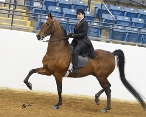 Villanova Nursing alumna wins equestrian events