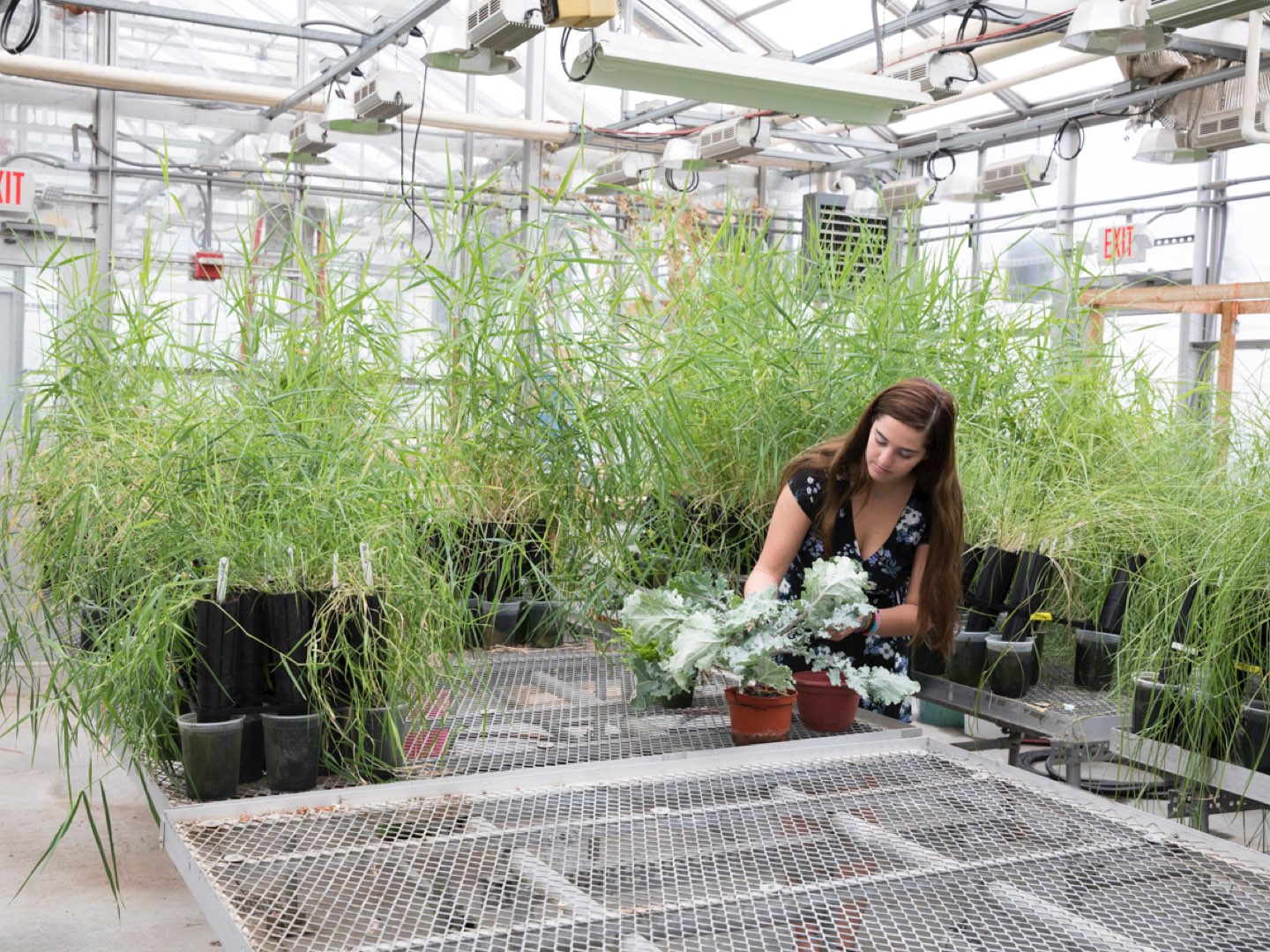 Giannina Guzman Checks Plants In The Greenhouse On Villanovau0027s Campus.