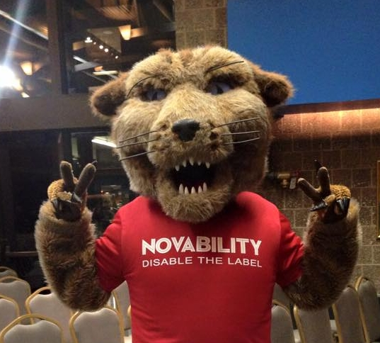 Wildcat and Novability